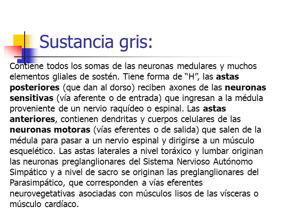 Sustancia gris: