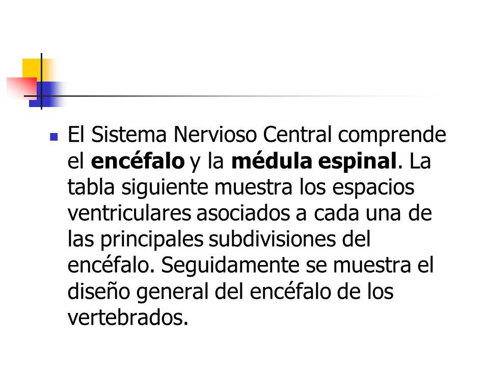 El Sistema Nervioso Central comprende el encéfalo y la médula espinal