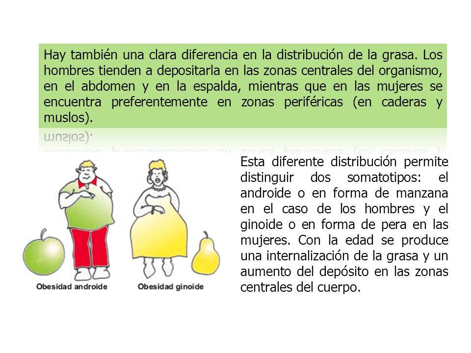 Hay también una clara diferencia en la distribución de la grasa