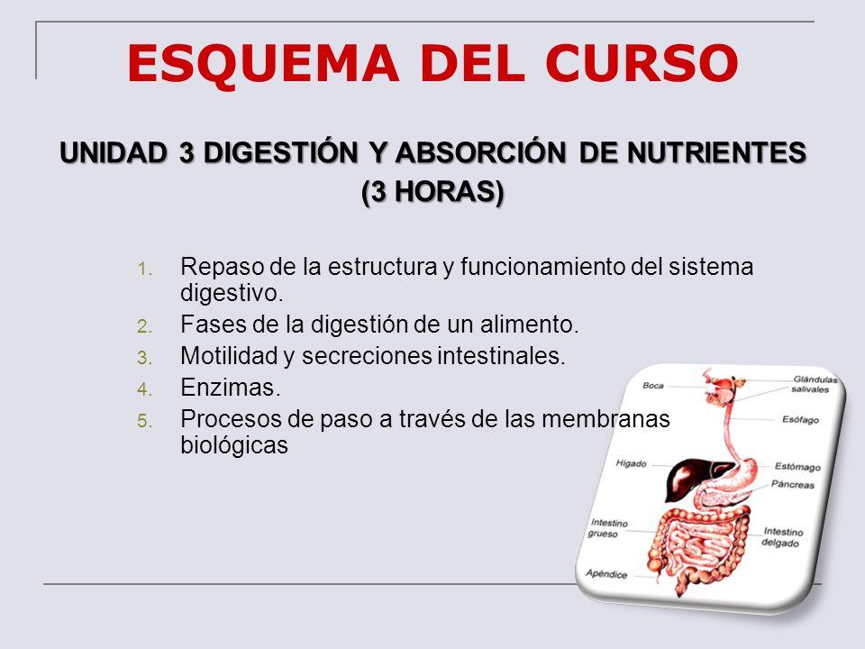 UNIDAD 3 DIGESTIÓN Y ABSORCIÓN DE NUTRIENTES