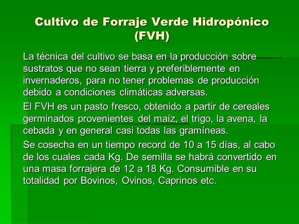 Cultivo de Forraje Verde Hidropónico (FVH)