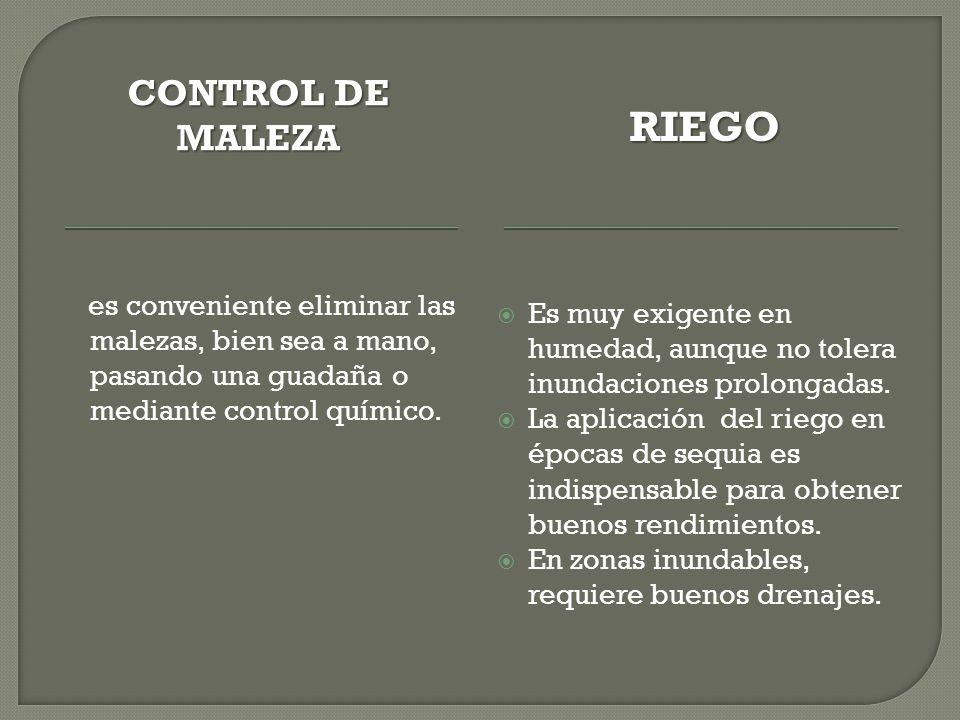 RIEGO CONTROL DE MALEZA