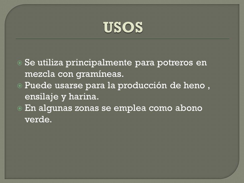 USOS Se utiliza principalmente para potreros en mezcla con gramíneas.