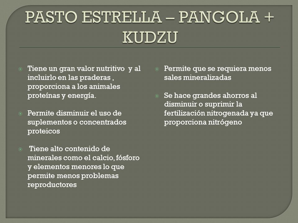 PASTO ESTRELLA – PANGOLA + KUDZU