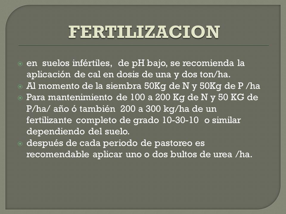 FERTILIZACION en suelos infértiles, de pH bajo, se recomienda la aplicación de cal en dosis de una y dos ton/ha.