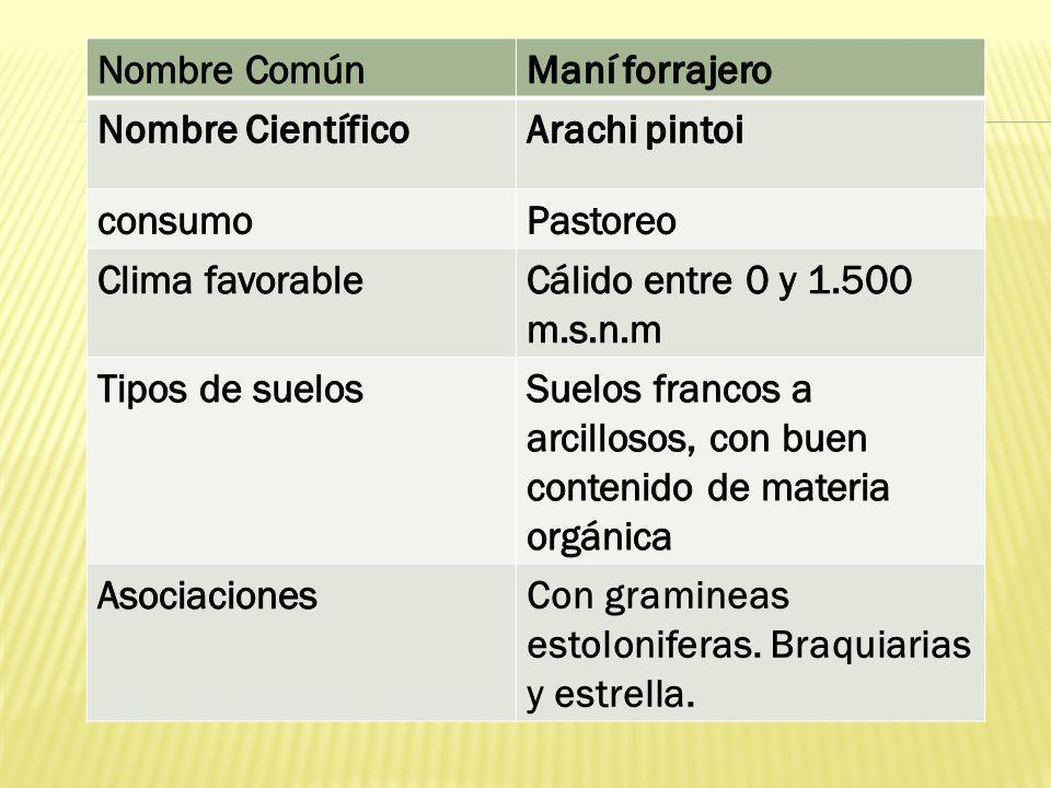 Nombre Común Maní forrajero. Nombre Científico. Arachi pintoi. consumo. Pastoreo. Clima favorable.