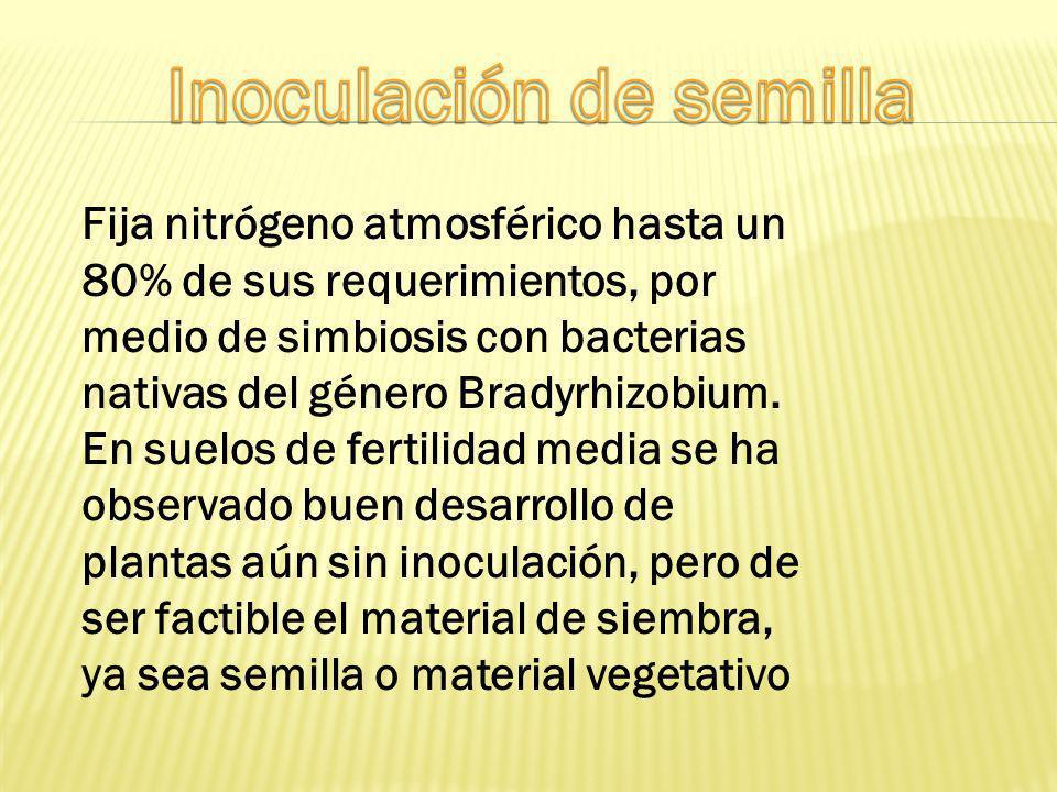 Inoculación de semilla