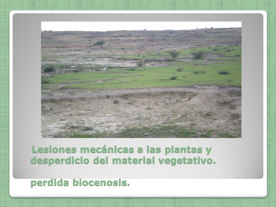 Lesiones mecánicas a las plantas y desperdicio del material vegetativo