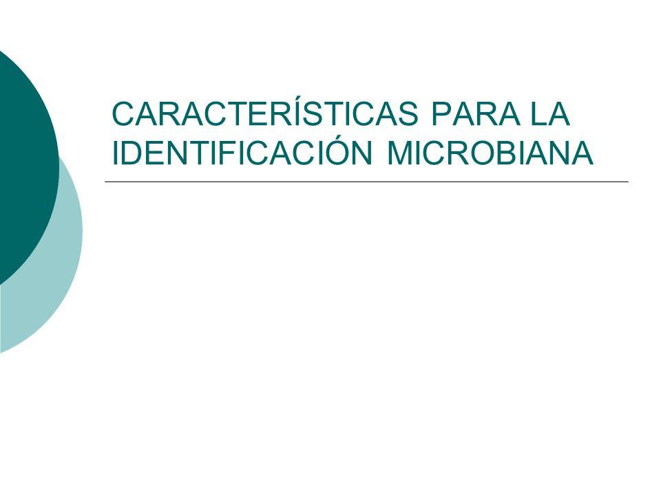 CARACTERÍSTICAS PARA LA IDENTIFICACIÓN MICROBIANA