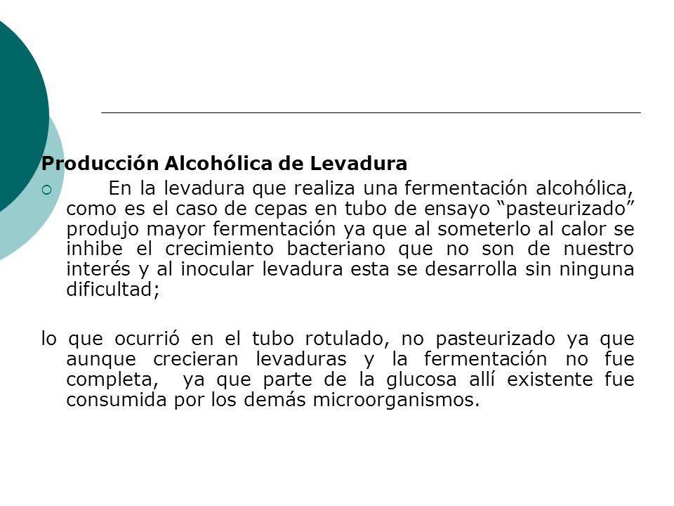 Producción Alcohólica de Levadura