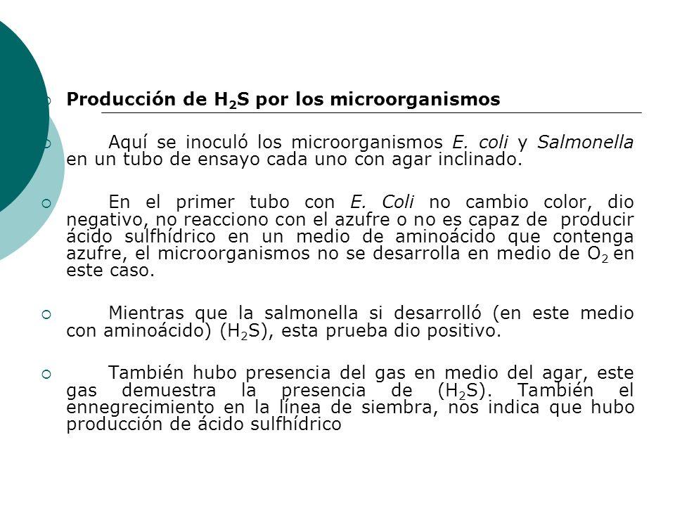 Producción de H2S por los microorganismos