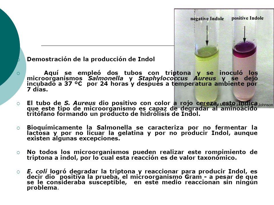Demostración de la producción de Indol