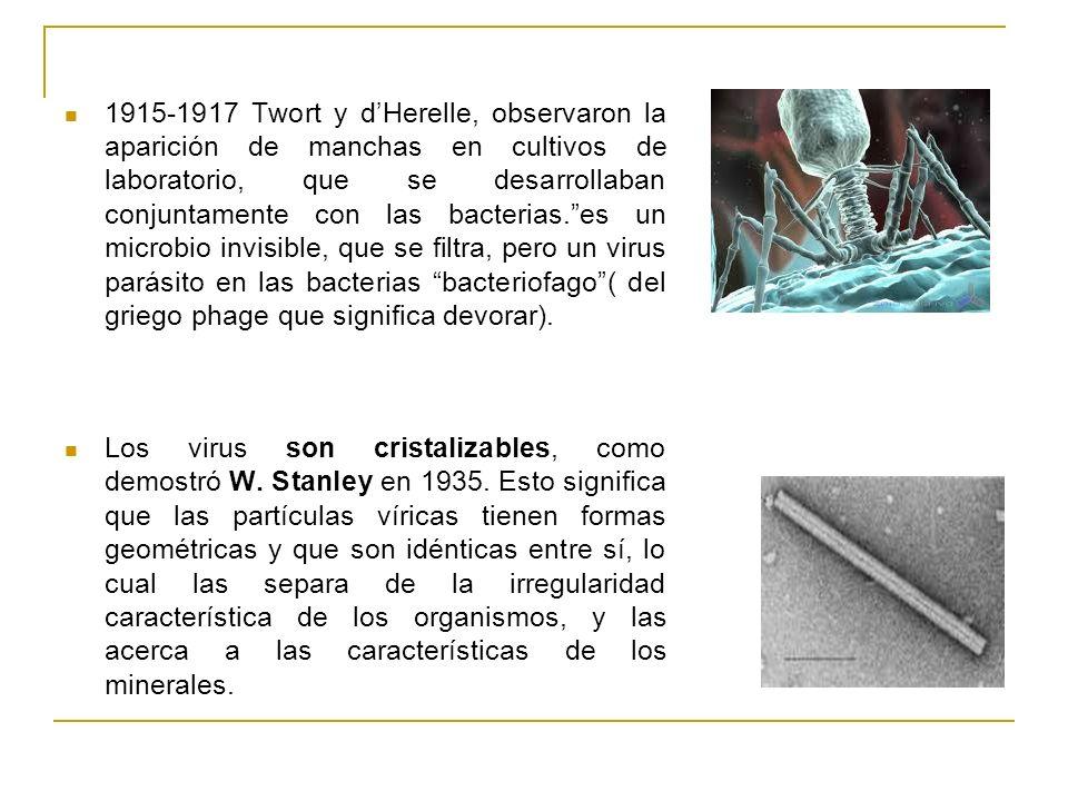 1915-1917 Twort y d'Herelle, observaron la aparición de manchas en cultivos de laboratorio, que se desarrollaban conjuntamente con las bacterias. es un microbio invisible, que se filtra, pero un virus parásito en las bacterias bacteriofago ( del griego phage que significa devorar).