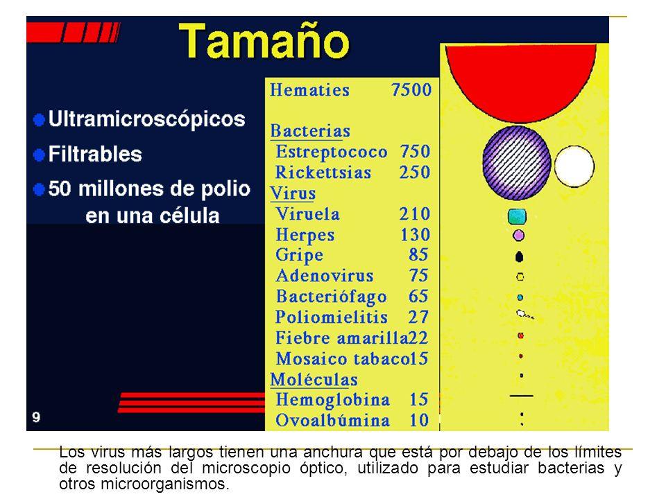 Los virus más largos tienen una anchura que está por debajo de los límites de resolución del microscopio óptico, utilizado para estudiar bacterias y otros microorganismos.