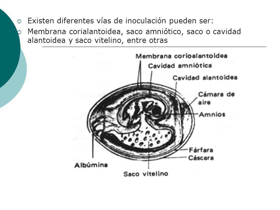 Existen diferentes vías de inoculación pueden ser: