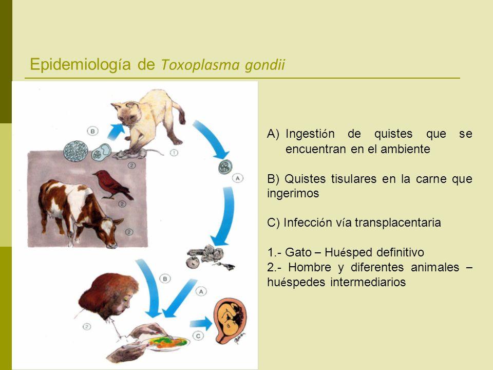 Epidemiología de Toxoplasma gondii