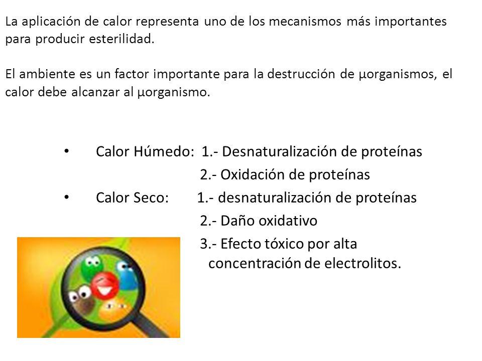 Calor Húmedo: 1.- Desnaturalización de proteínas