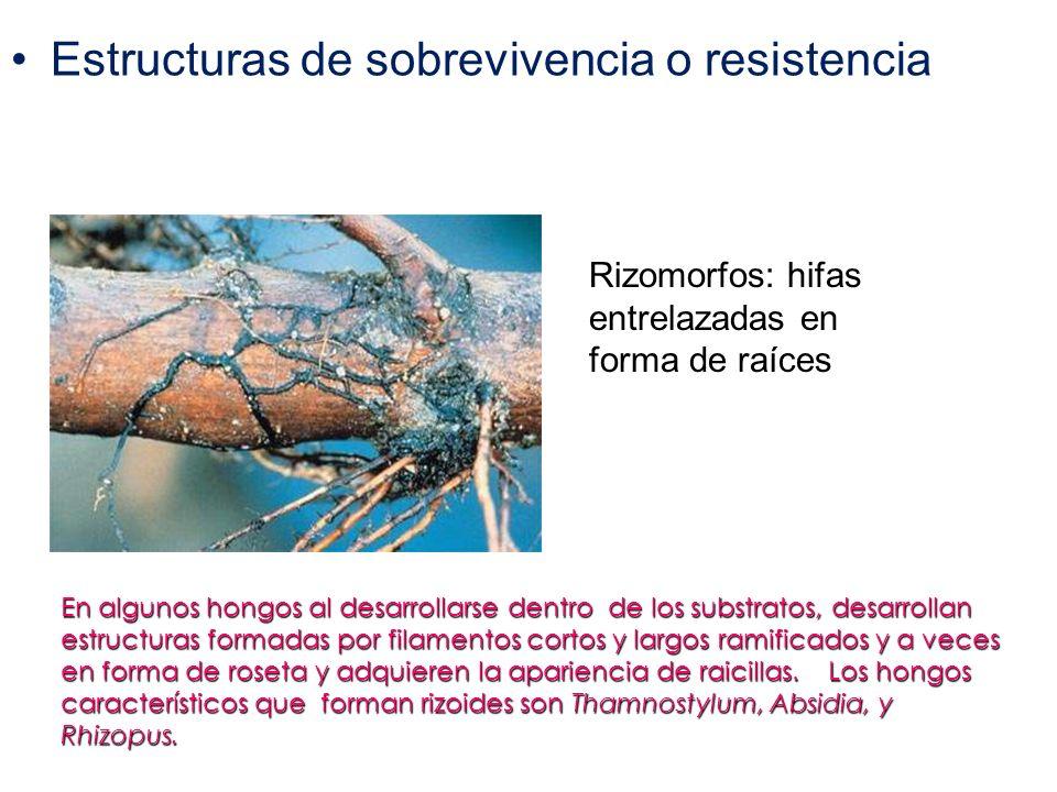 Estructuras de sobrevivencia o resistencia