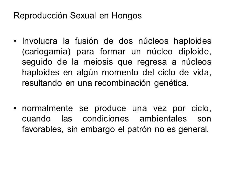 Reproducción Sexual en Hongos