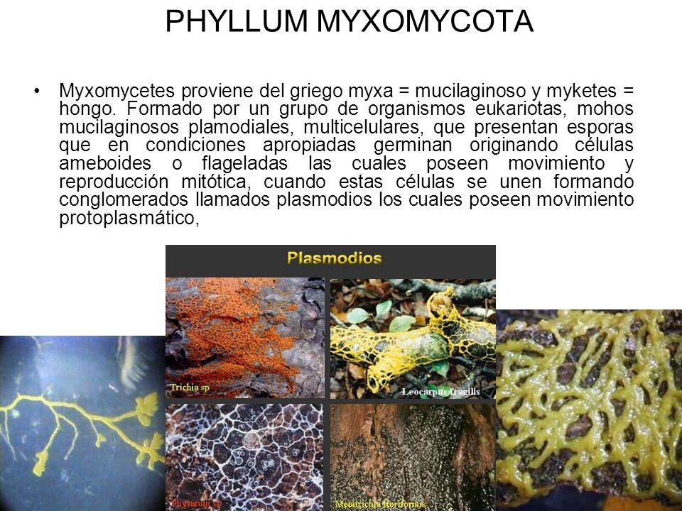PHYLLUM MYXOMYCOTA