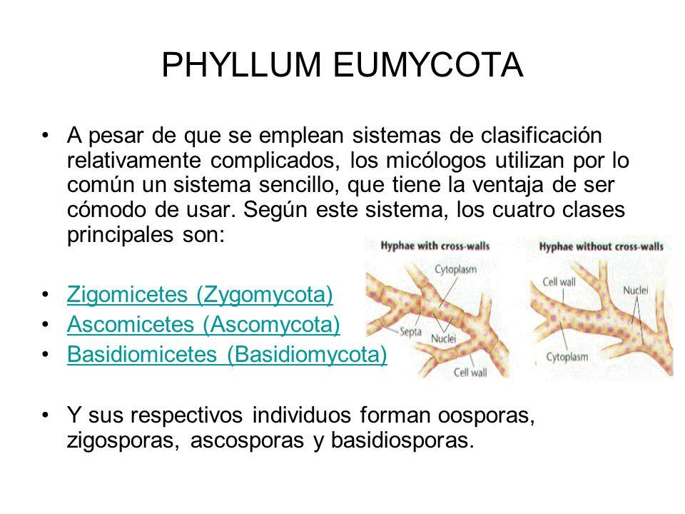 PHYLLUM EUMYCOTA