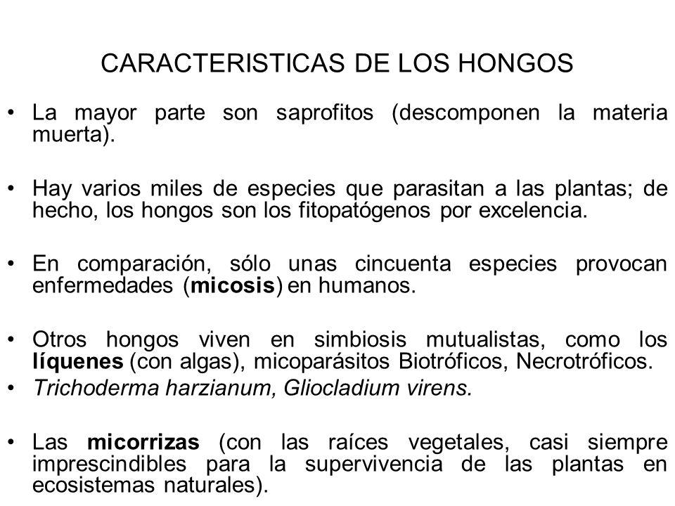 CARACTERISTICAS DE LOS HONGOS