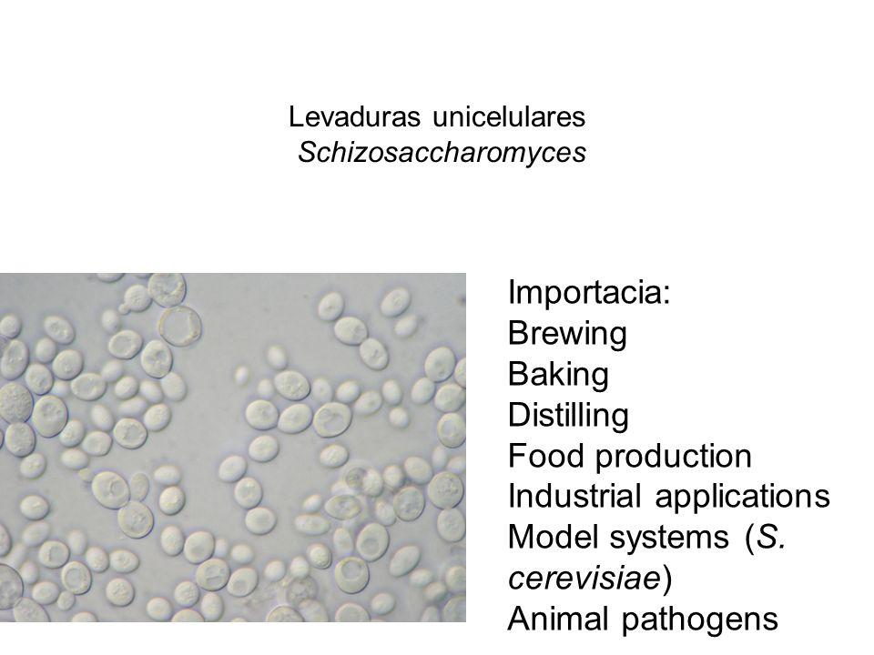 Levaduras unicelulares Schizosaccharomyces