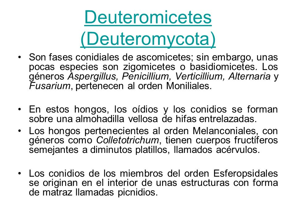 Deuteromicetes (Deuteromycota)