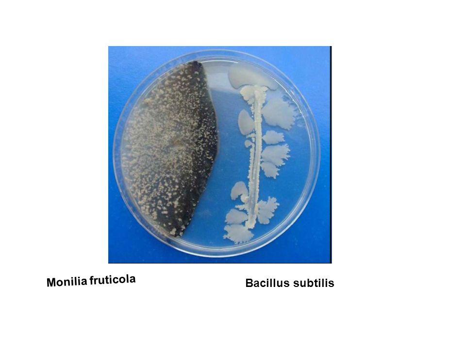 Monilia fruticola Bacillus subtilis