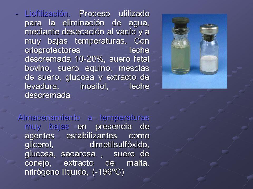 Liofilización. Proceso utilizado para la eliminación de agua, mediante desecación al vacío y a muy bajas temperaturas. Con crioprotectores leche descremada 10-20%, suero fetal bovino, suero equino, mesclas de suero, glucosa y extracto de levadura. inositol, leche descremada