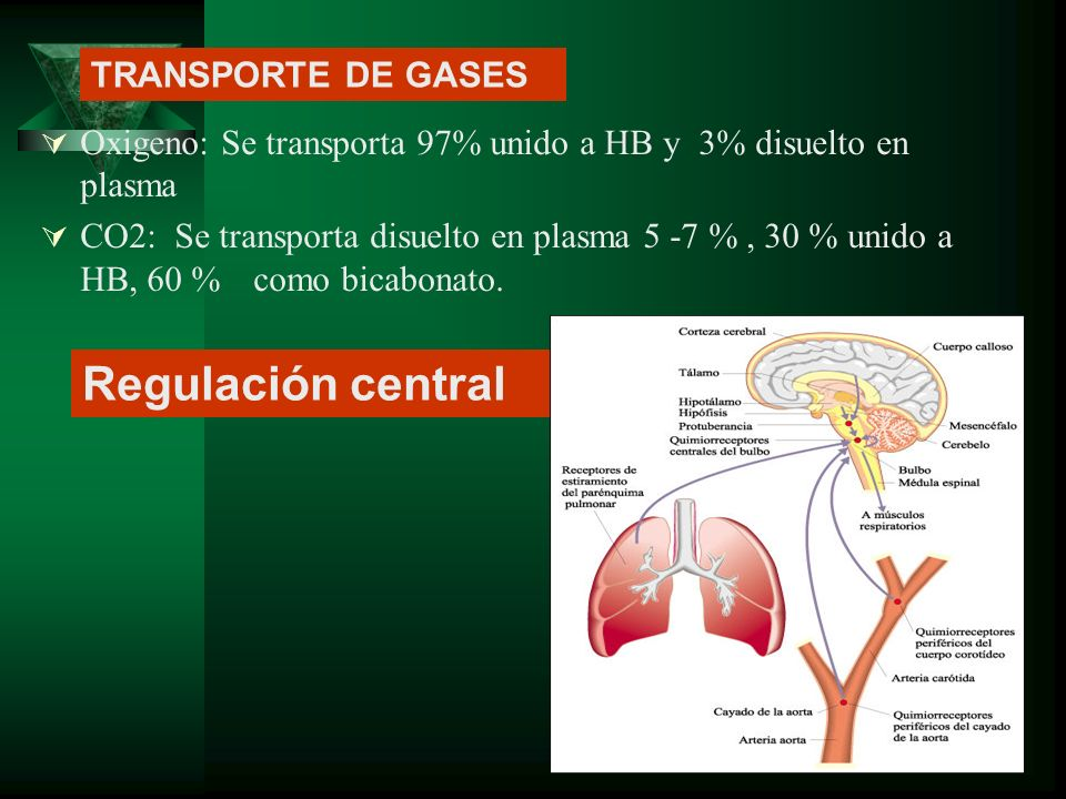 Regulación central TRANSPORTE DE GASES