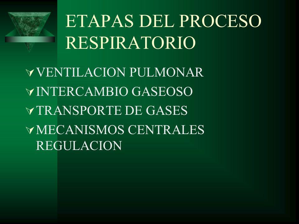 ETAPAS DEL PROCESO RESPIRATORIO