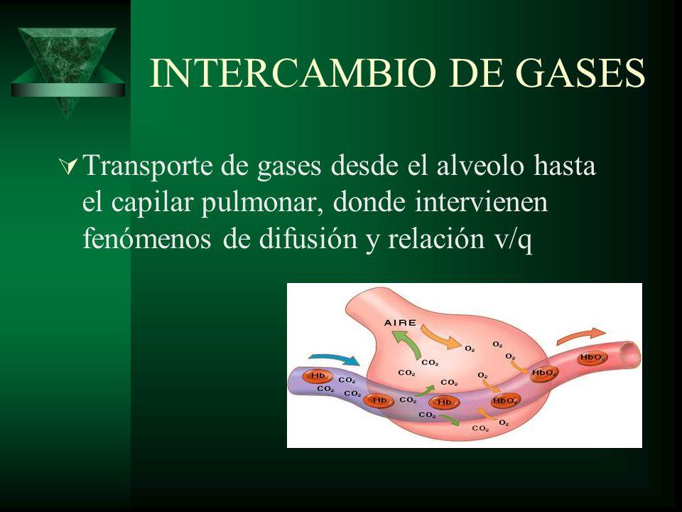 INTERCAMBIO DE GASES Transporte de gases desde el alveolo hasta el capilar pulmonar, donde intervienen fenómenos de difusión y relación v/q.