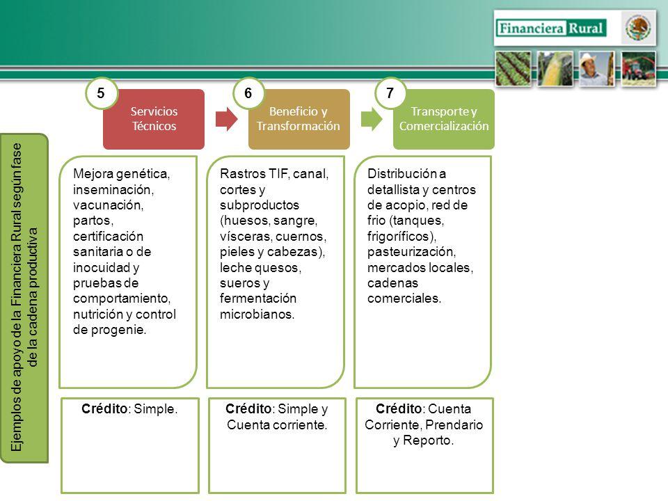 5 6 7 Servicios Técnicos Beneficio y Transformación