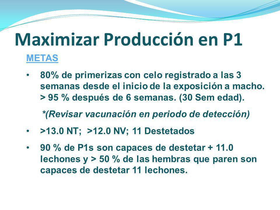 Maximizar Producción en P1