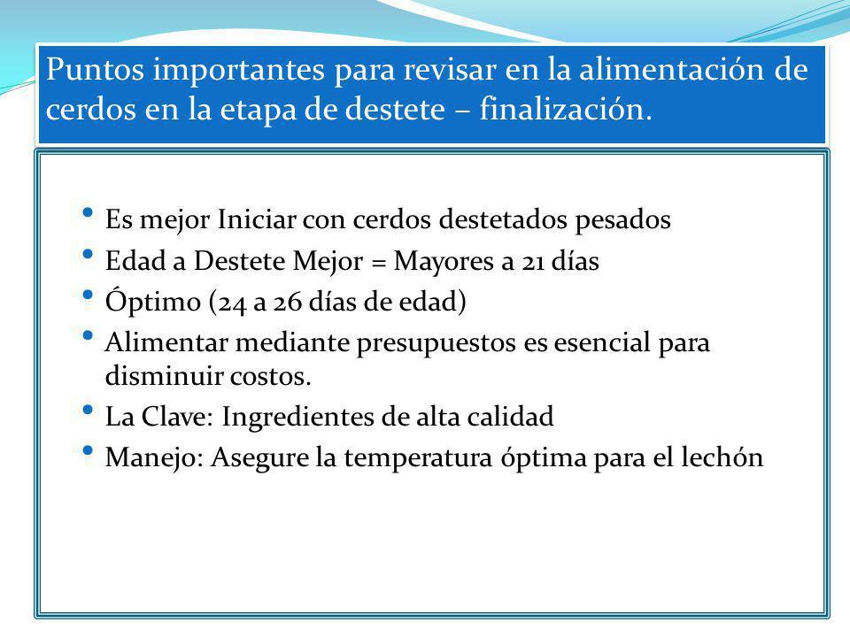 Puntos importantes para revisar en la alimentación de cerdos en la etapa de destete – finalización.