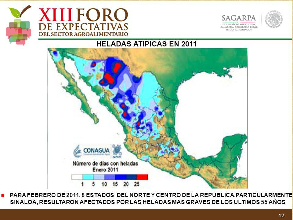HELADAS ATIPICAS EN 2011 PARA FEBRERO DE 2011, 8 ESTADOS DEL NORTE Y CENTRO DE LA REPUBLICA,PARTICULARMENTE.