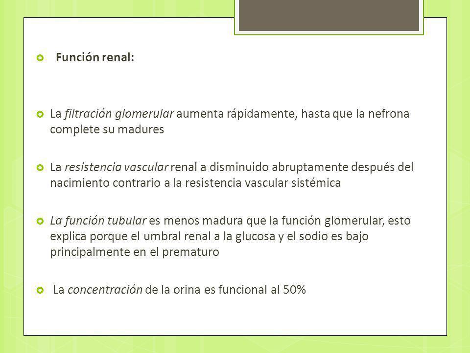 Función renal: La filtración glomerular aumenta rápidamente, hasta que la nefrona complete su madures.