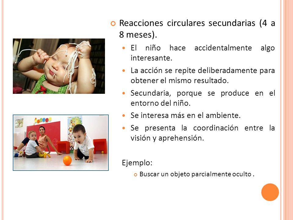 Reacciones circulares secundarias (4 a 8 meses).