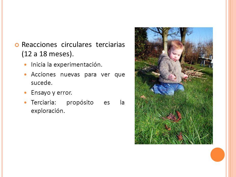 Reacciones circulares terciarias (12 a 18 meses).