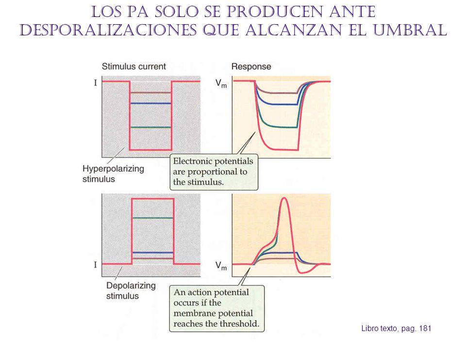 Los PA solo se producen ante desporalizaciones que alcanzan el umbral