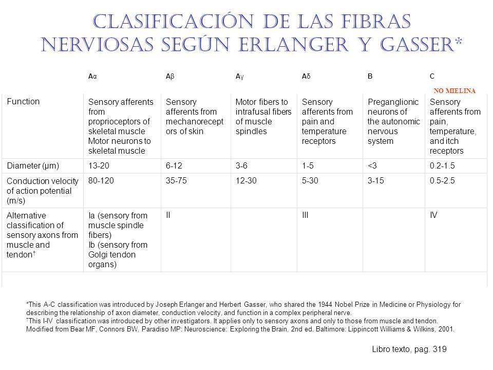 Clasificación de las fibras nerviosas según Erlanger y Gasser*