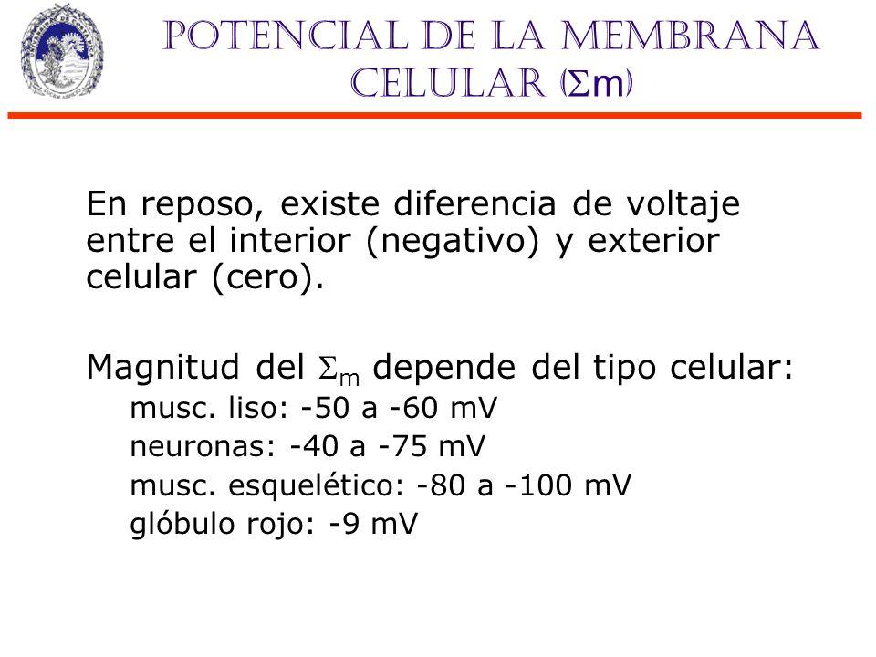Potencial de la membrana celular (m)