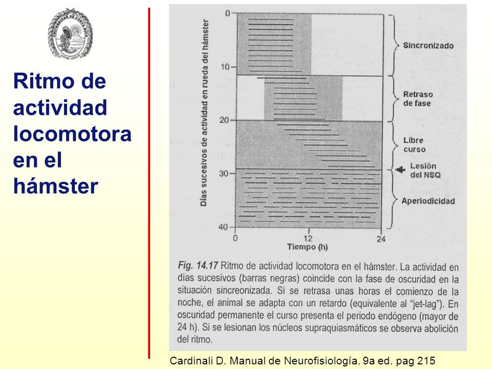 Ritmo de actividad locomotora en el hámster