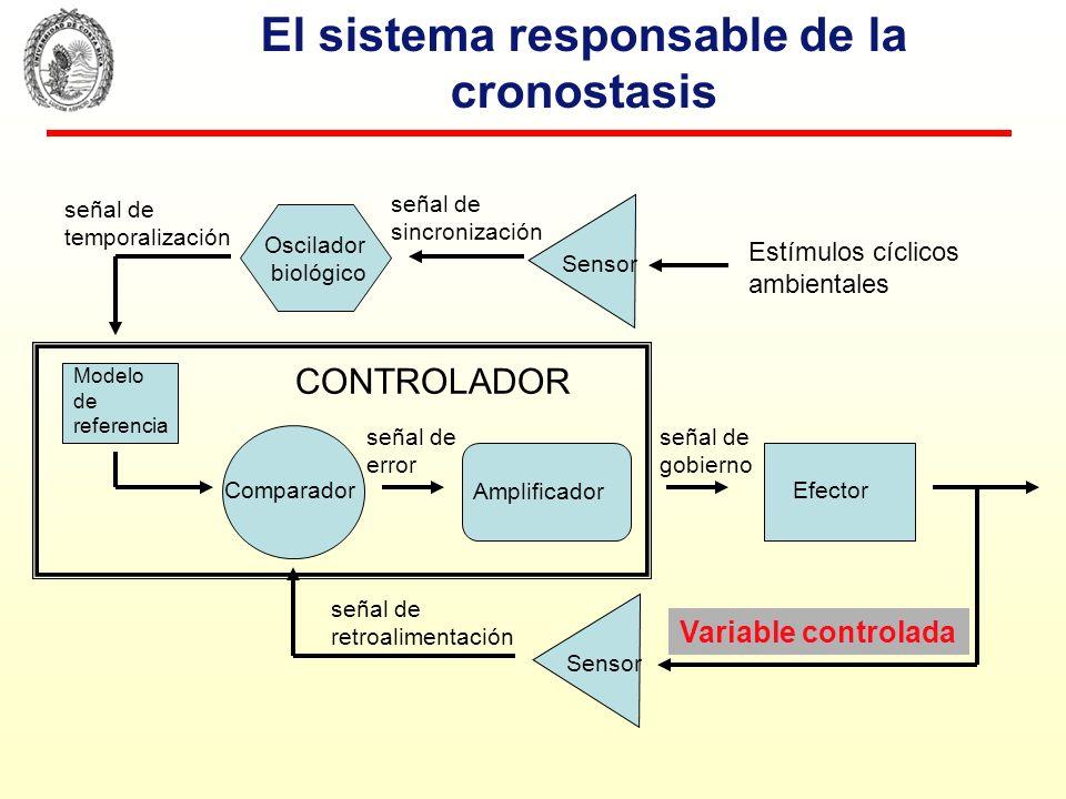 El sistema responsable de la cronostasis