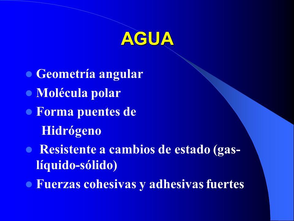 AGUA Geometría angular Molécula polar Forma puentes de Hidrógeno