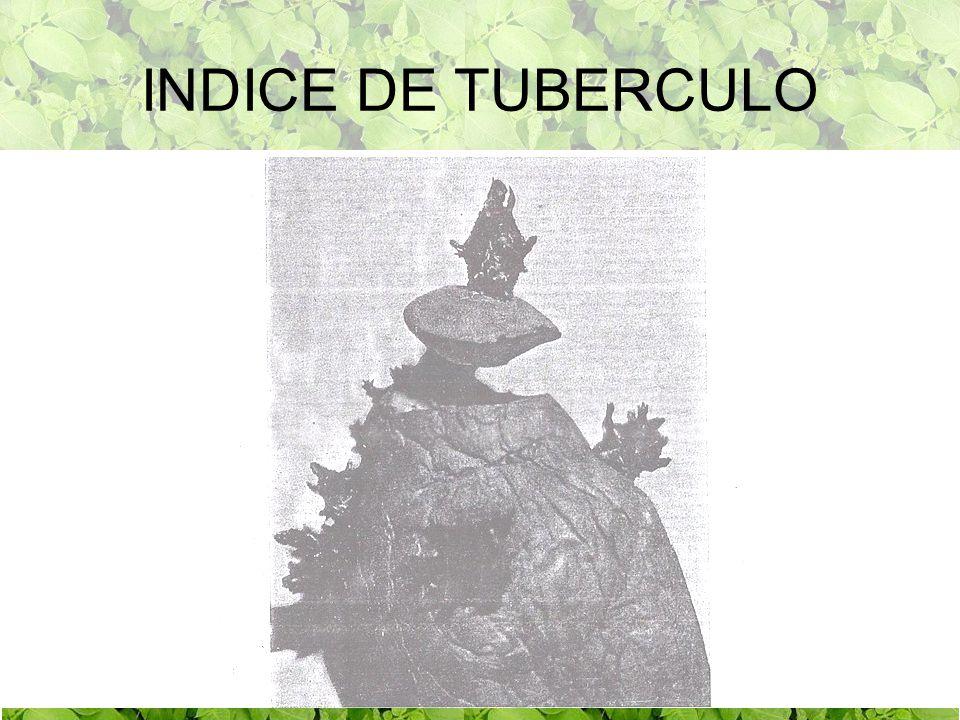 INDICE DE TUBERCULO