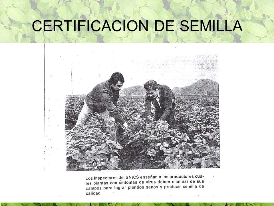 CERTIFICACION DE SEMILLA
