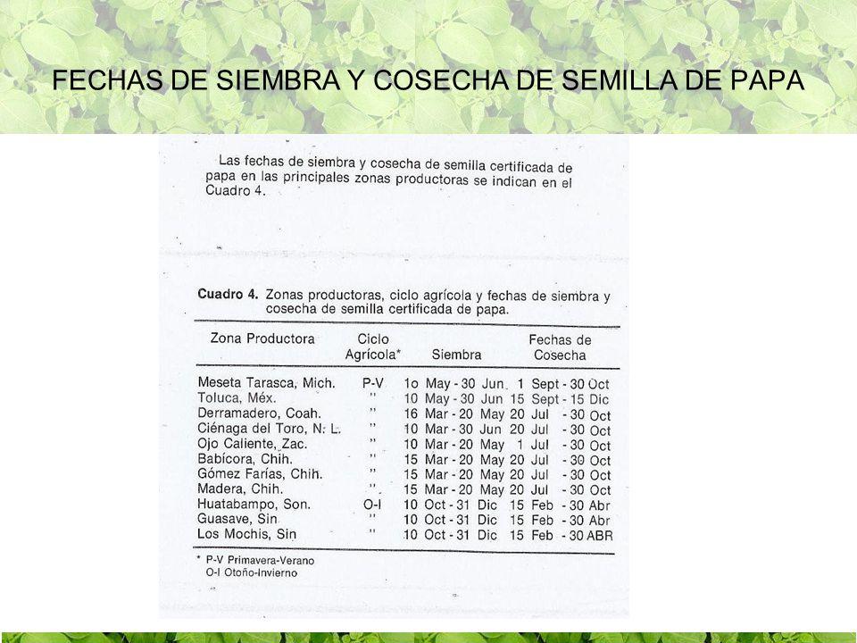 FECHAS DE SIEMBRA Y COSECHA DE SEMILLA DE PAPA