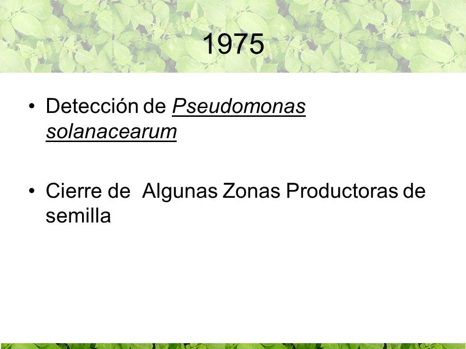 1975 Detección de Pseudomonas solanacearum